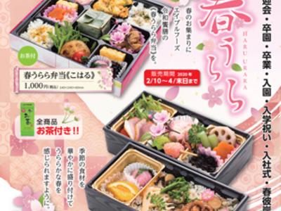お花見弁当「春うらら」が今年も発売開始!!